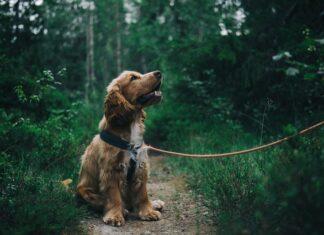 szelki dla psa
